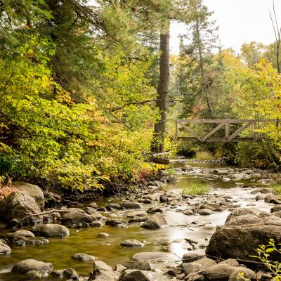 Creek with bridge
